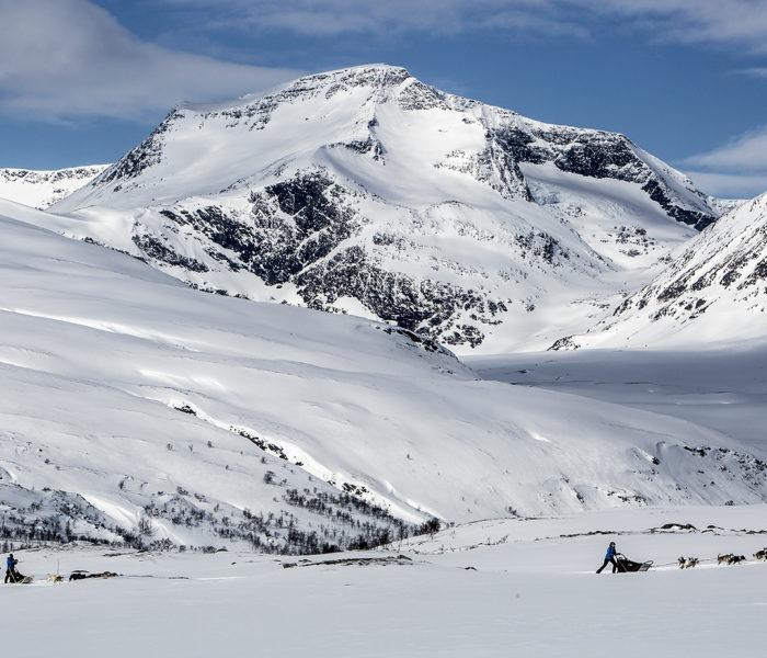 Putovanje psećim saonicama zaleđenom Arktikom? Čini se kao odlična ideja!