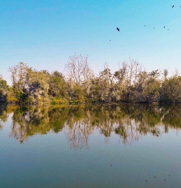 Europska Amazona: Zašto posjetiti Kopački rit i kako što bolje organizirati izlet?