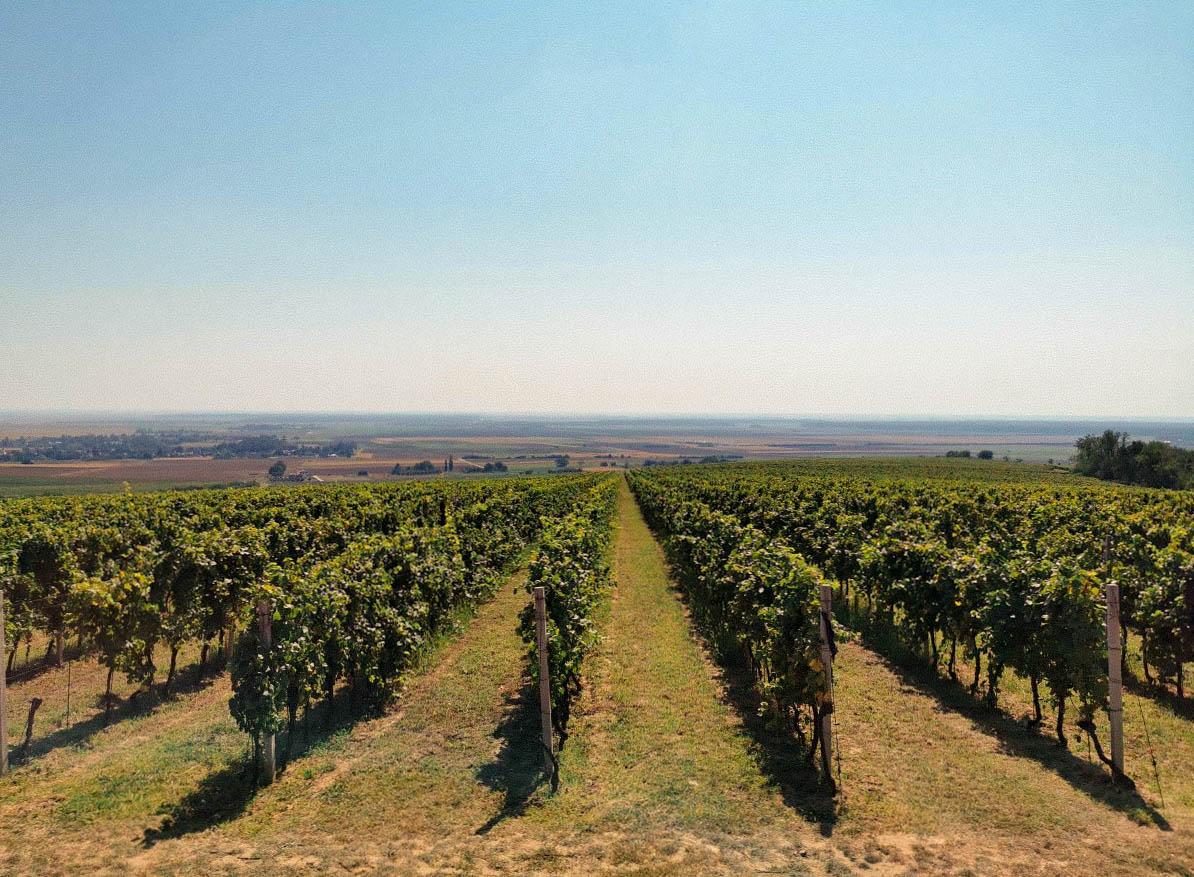 Slavonija i Baranja: Popis glavnih atrakcija koje trebaš posjetiti i doživjeti