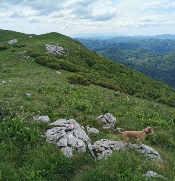 Što su markacije i kako nam pomažu na planinarskoj stazi?