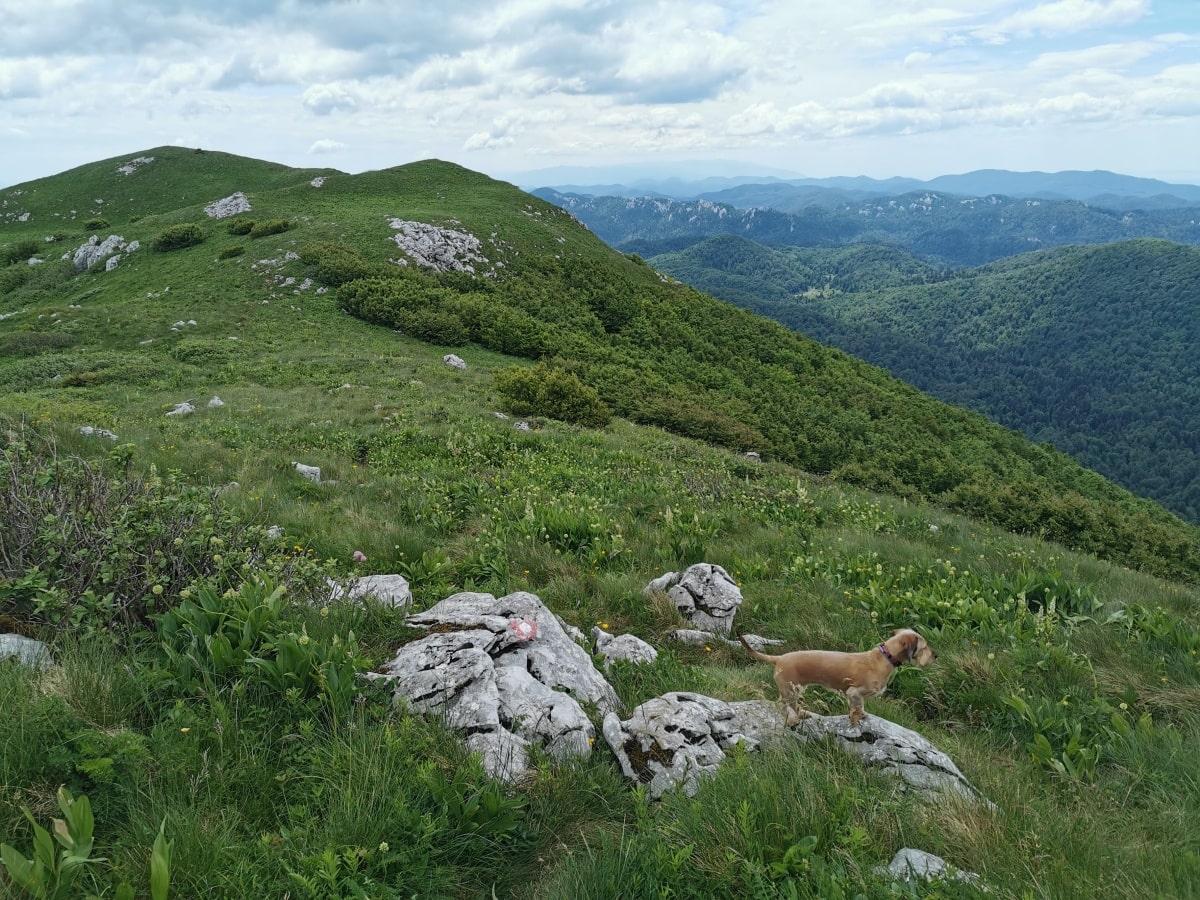 planinarske_markacije